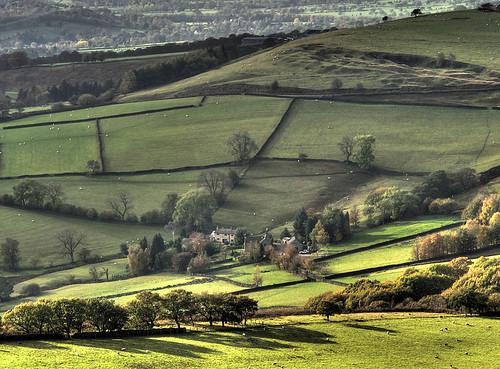 Sheep - Peakland