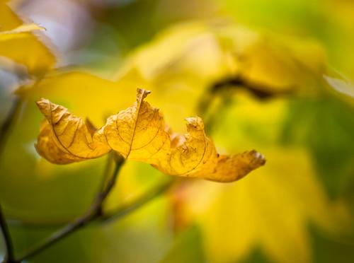 Leaves & Bokeh Nov. 3rd 3 of 4