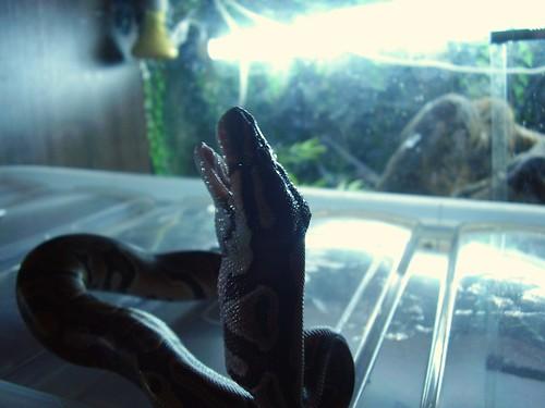 2011-11-09 Oscar feed 04