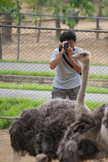 North Korean Ostrich Farm Cameraman
