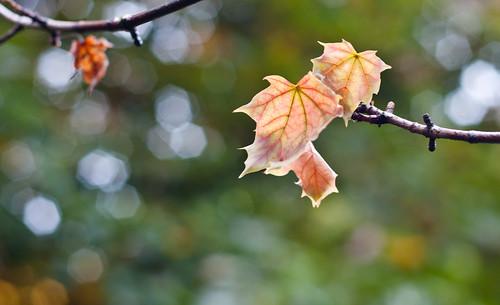 Leaf Veins & Bokeh
