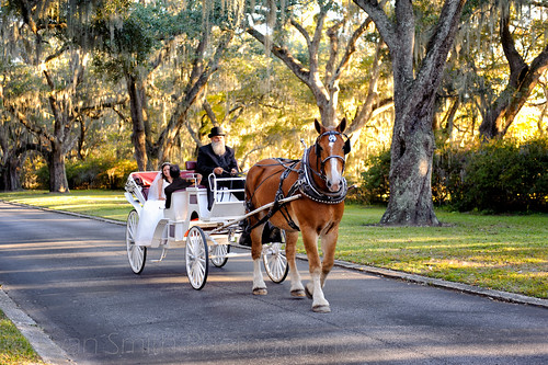 Bride arriving on carriage - A quick shot from today's wedding. - Litchfield Plantation
