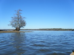 Lone Cypress on Lake Marion
