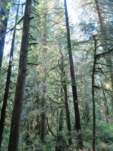 The old growth