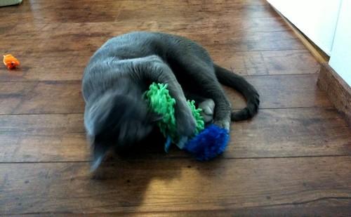 Uusi kissanminttulelu!