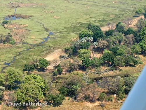Okavango Delta from the air
