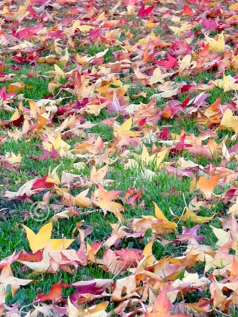 Sinfonia di foglie