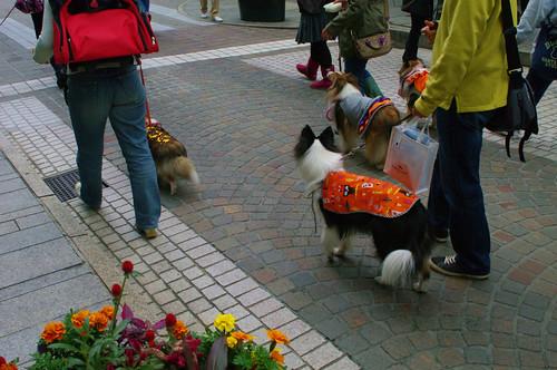 dogs' Halloween meeting