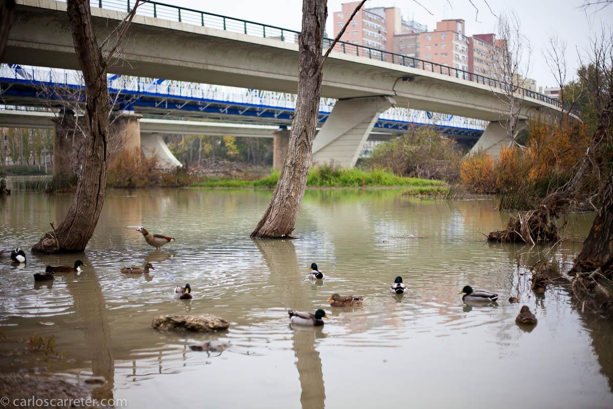 Un remanso bajo el puente
