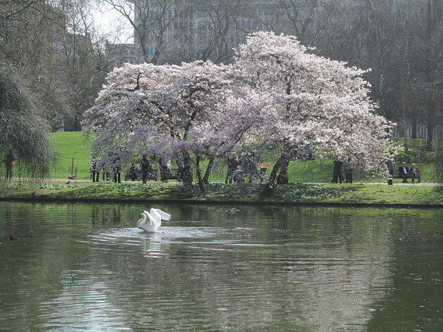 Spring in St James's Park, London