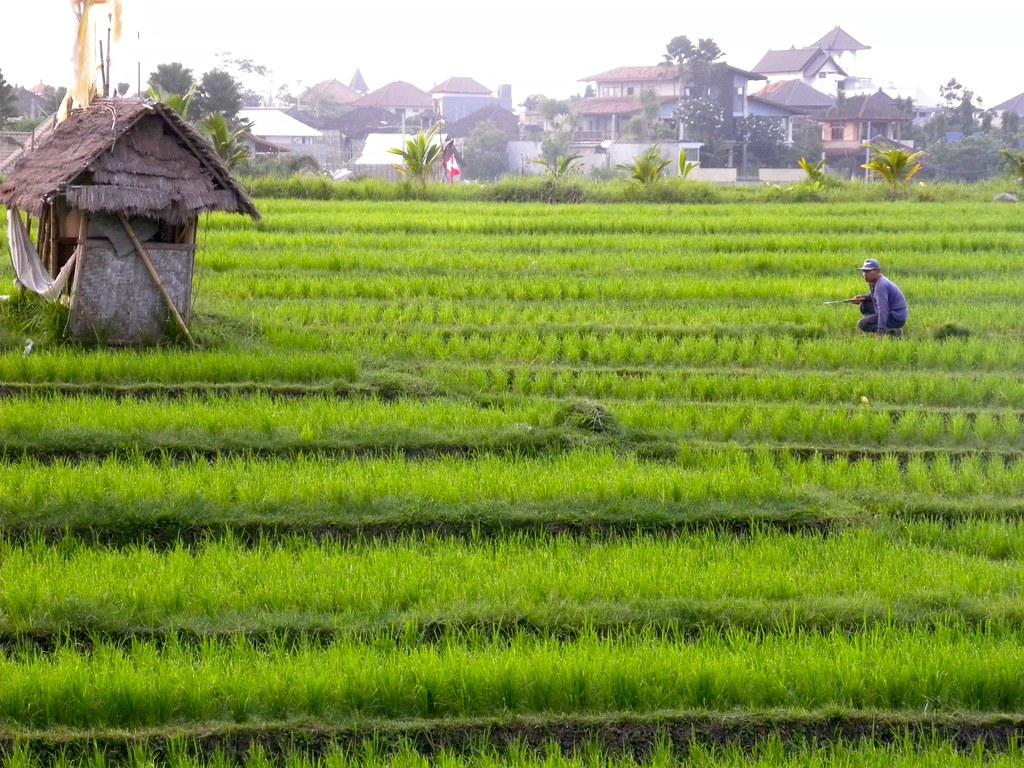 Canggu hostels
