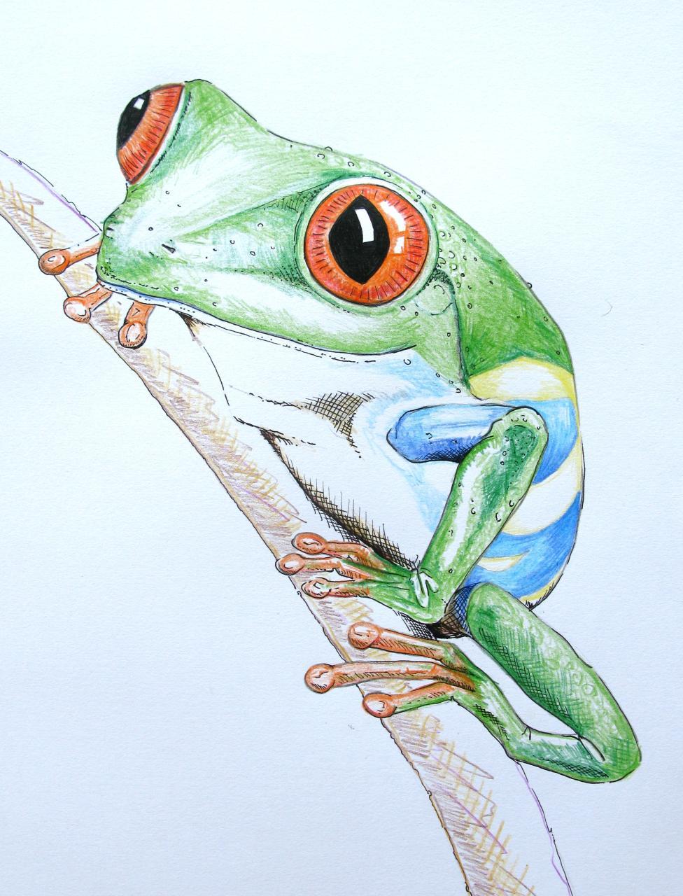 tree frog drawing 5958910255 506a5144e6 o jpg