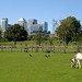 Country life on the Isle of Dogs (Mudchute Park & Farm)