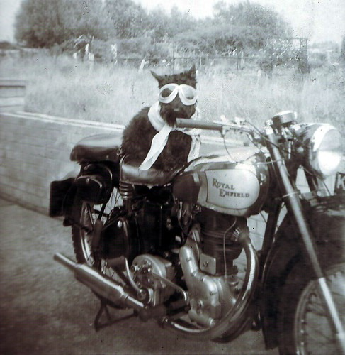 Dog on a Motorcycle by H*B