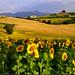 paesaggio in giallo nella luce del mattino