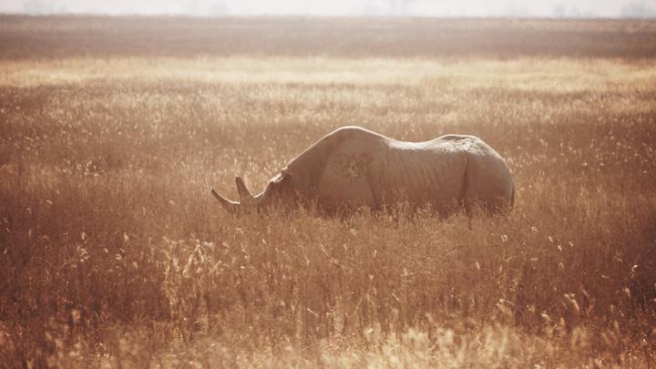 Black Rhino @ Ngorogoro