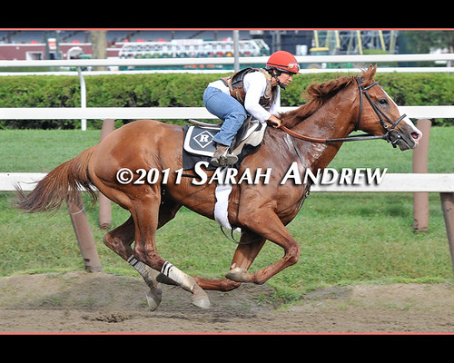 Shackleford's six-furlong workout