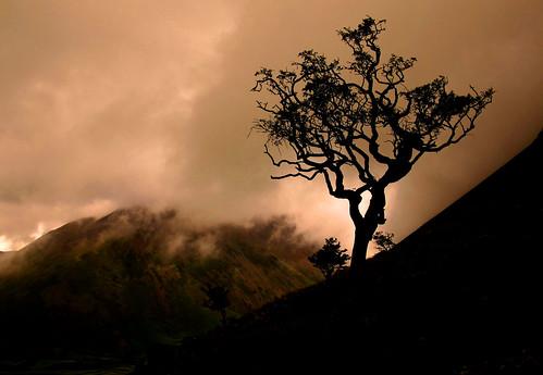 Lingmell tree