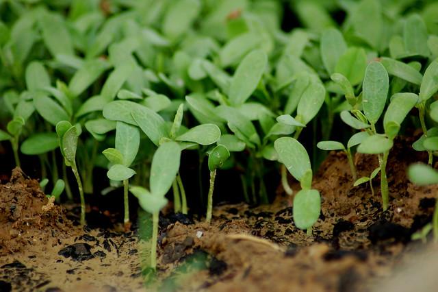 Little Green Plants