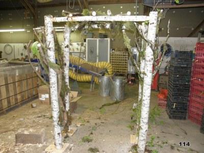 mossy branches & birch pergola