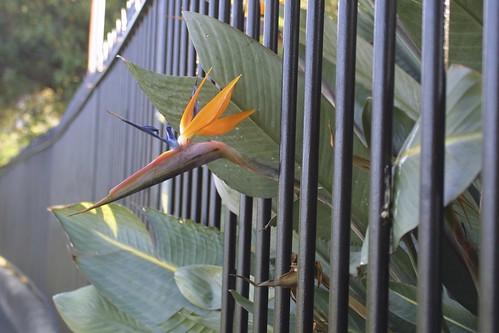 Jailbird by webmink