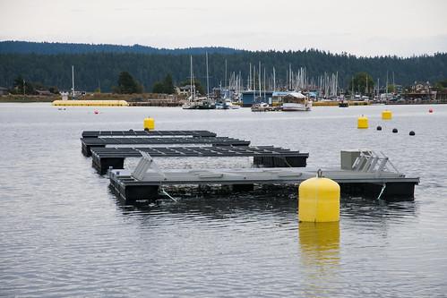 Solar FLUPSY installed in raft grid