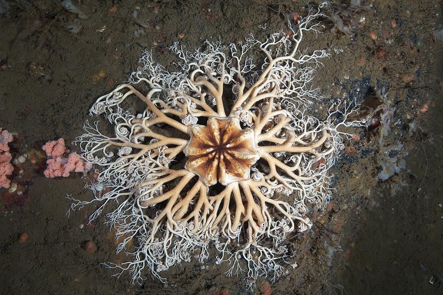 Biodiversidade marinha, para parecermos insignificantes  (4/6)