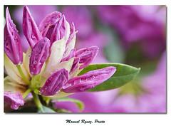 Flores 0105/11