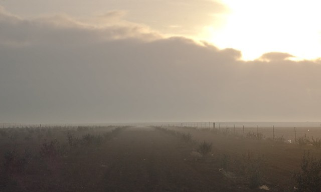 Misty morning in the Syrian desert