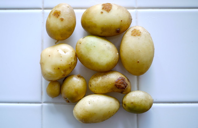 Surprise potatoes