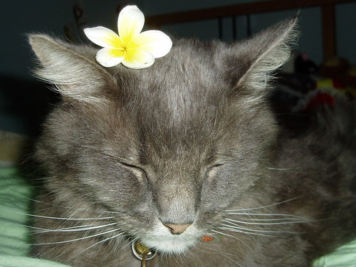 hugo clinic cat