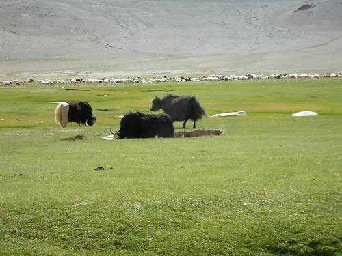 mongolia0274