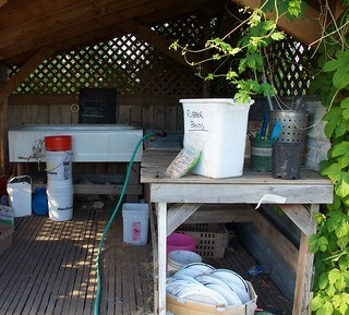 Photo of a farm washing shed, large white tub at back under lattice window, trestle table with plastic white bin at right, plus greenery.