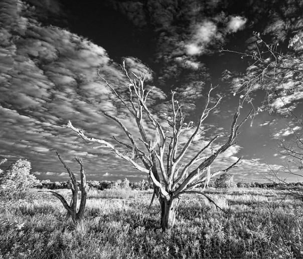 Tree and Woodstorks