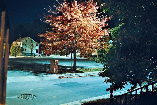 Oak at night