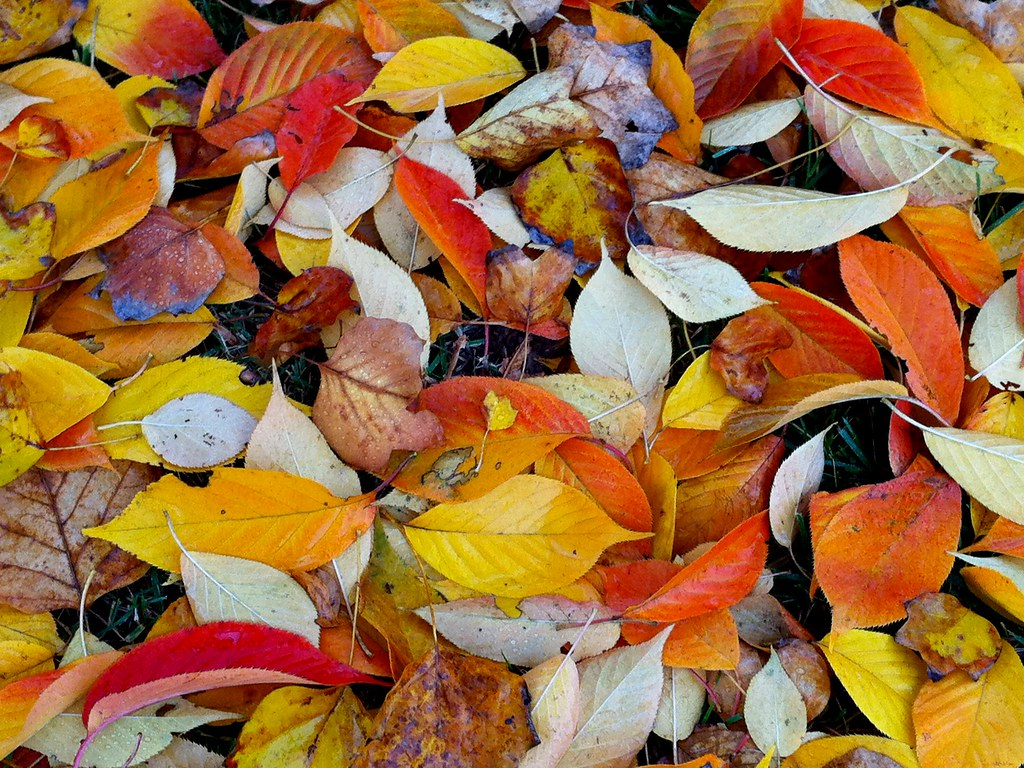 Falling leaves hid the path so quietly. ~John Bailey