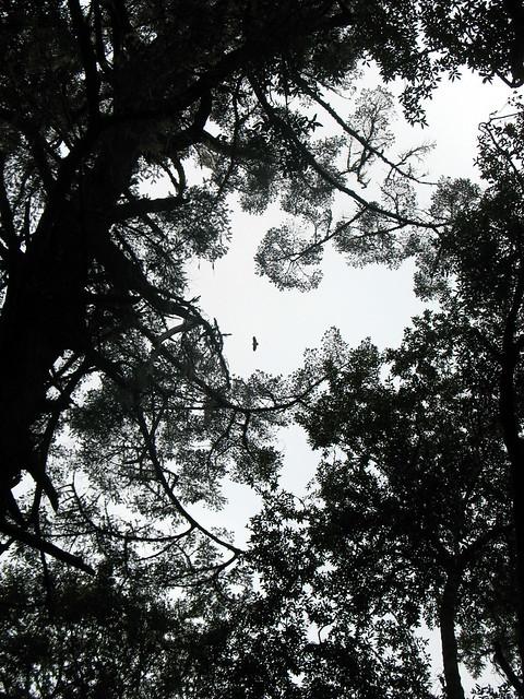 Treetops and bird