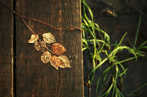 Autumn Leafs by Isoscelez