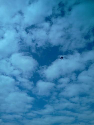 overhead - my backyard