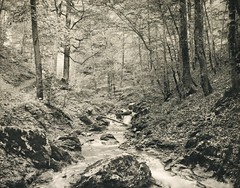 Waldinneres, 1891-20, by Moritz Nähr