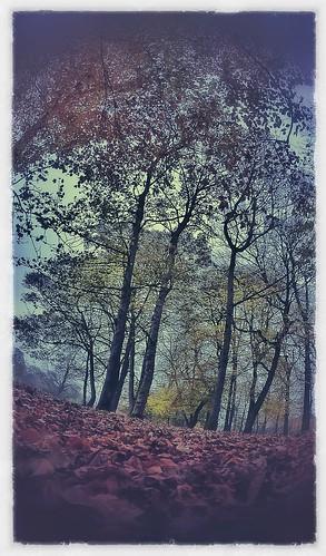 Autumn  by BagRat