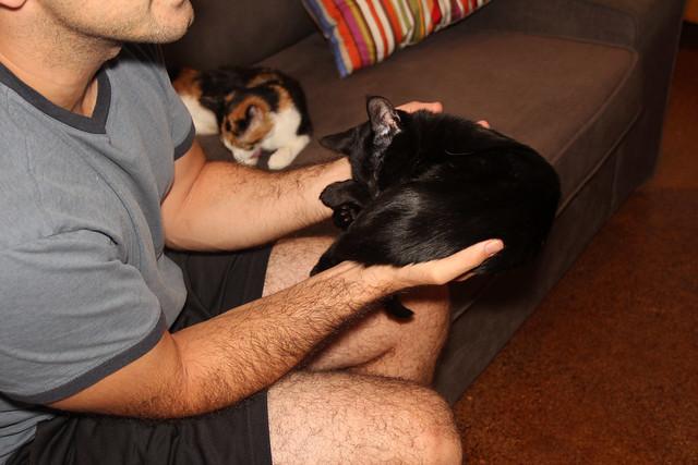 this cat will sleep anywhere