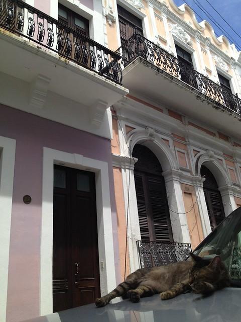 Stray cat Old San Juan