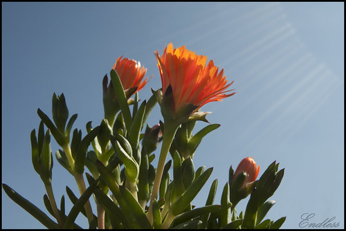 Buscando el sol by Endlesss
