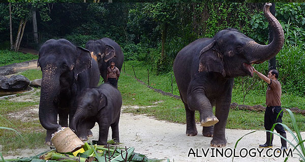 Aunt trumpets her trunk to cheer them on