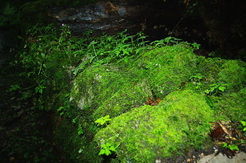 20110918-17_Mossy wall - Black Rock Valley (top of Cheddar Gorge by gary.hadden