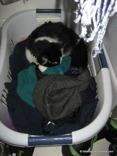 laundry 11-20-2011 12-41-40 PM