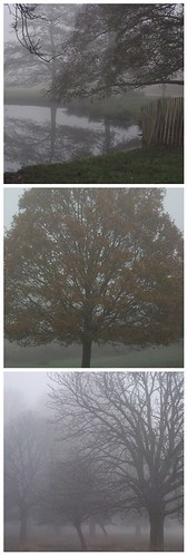 Richmond Park Fog 1