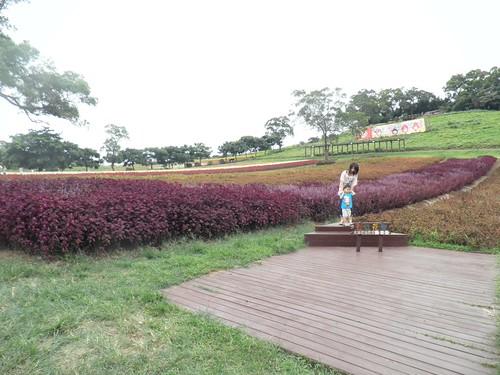 大溪花海農場1