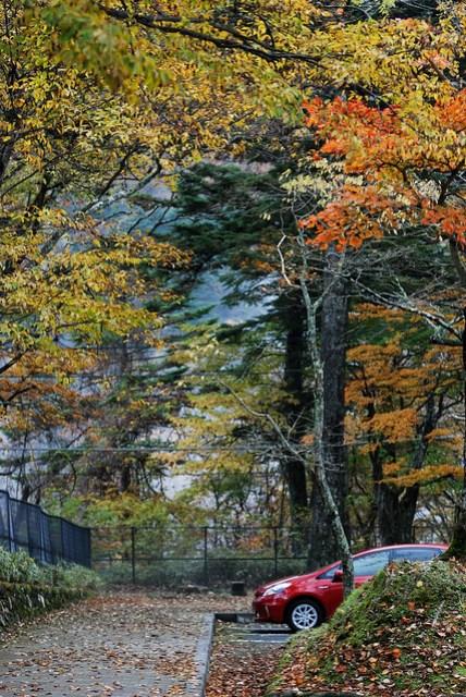 圍繞在落葉的停車場,也是一種浪漫